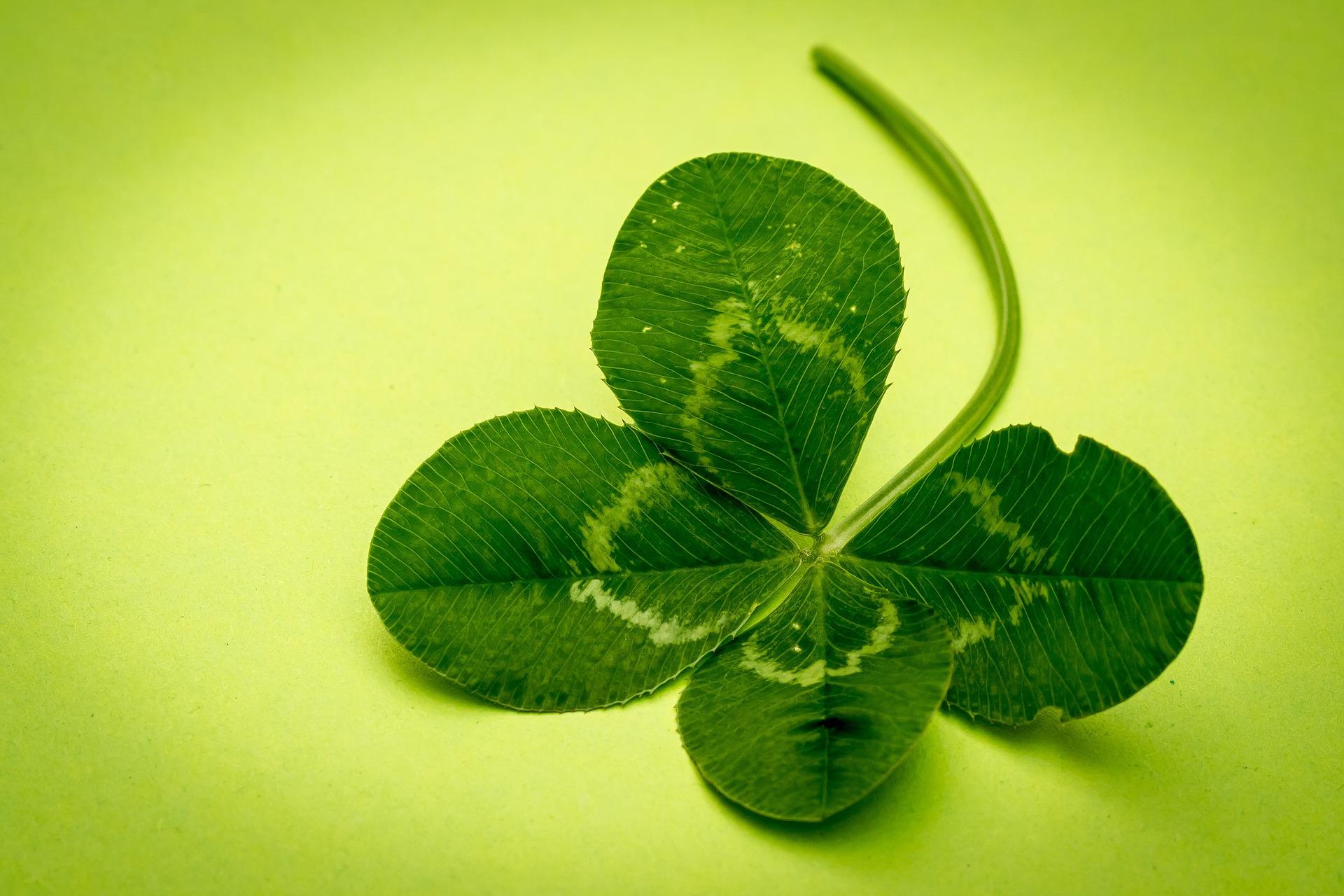 Vierblättriges Kleeblatt als Sinnbild wie man schnell und einfach für gute Glücksgefühle sorgen kann