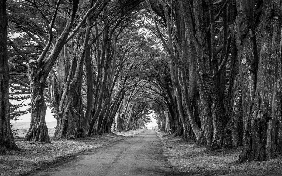Über Tod und Sterben –  und warum wir das Leben nur vowärts leben können