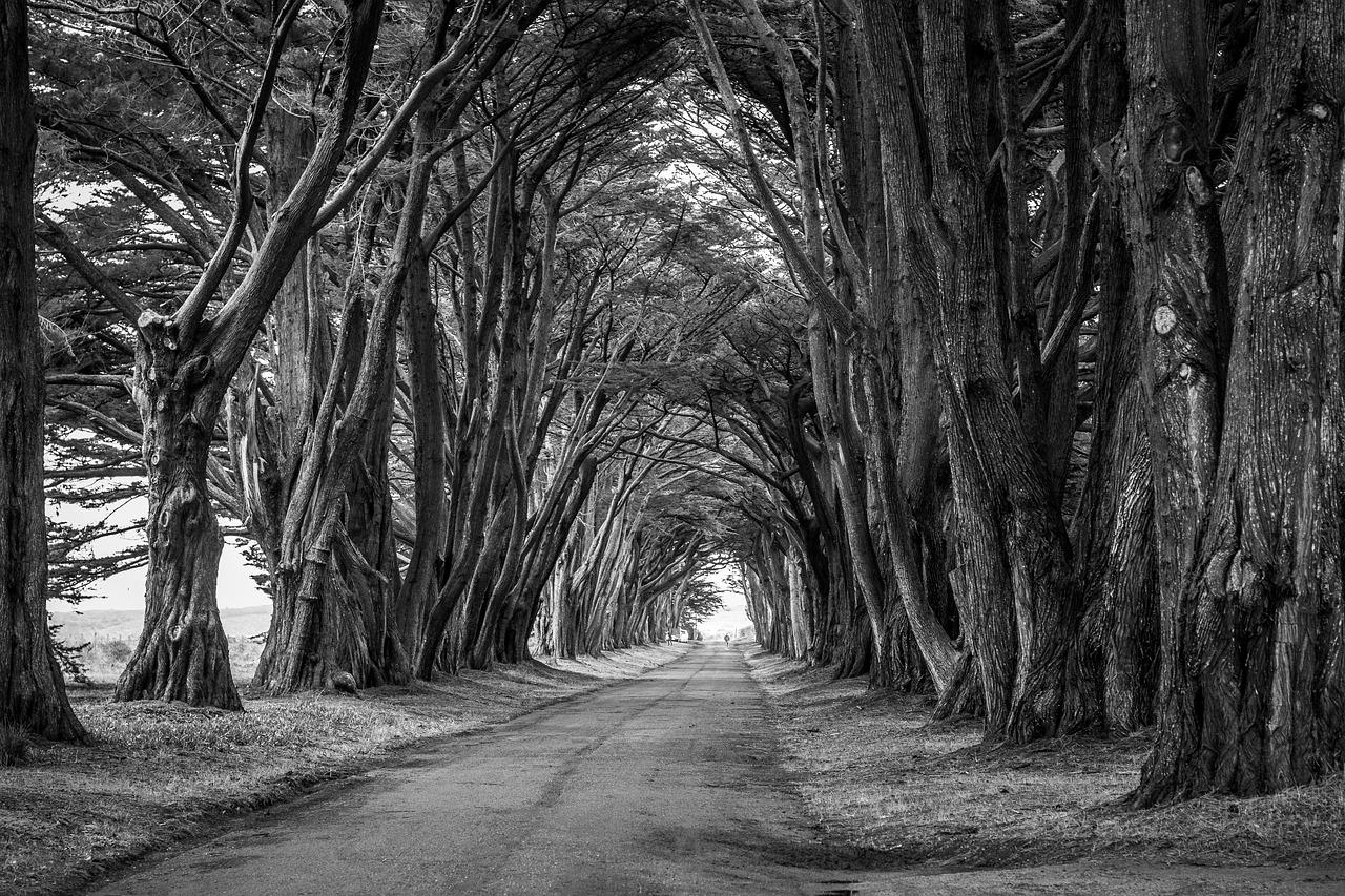 Allee mit hohen, dunklen Bäumen als Sinnbild für Tod und Sterben