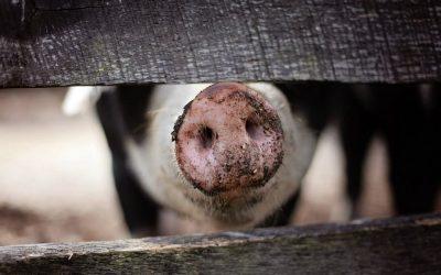 Wahrer Erfolg kommt aus dem Herzen – und was das Trüffelschwein damit zu hat