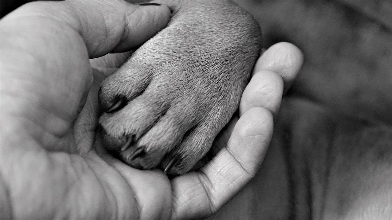 Hundepfote liegt in Menschenhand als Sinnbild für unser magisches Krafttier