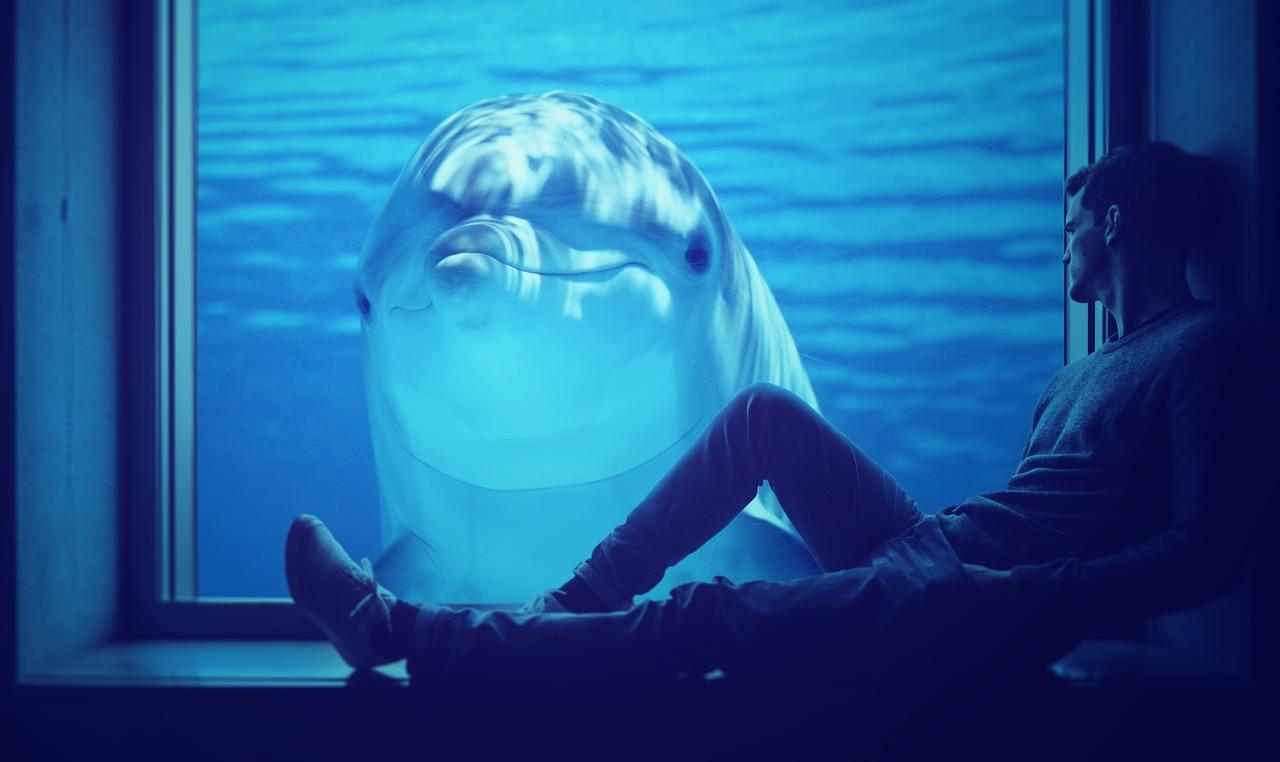 Mann sitzt vor einer Glasscheiber hinter der ein Delfin zu ihm schaut als Sinnbild für die Delfinstrategie