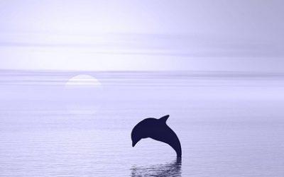 So stärkst du dein Selbstvertrauen  – mit der Delfinstrategie