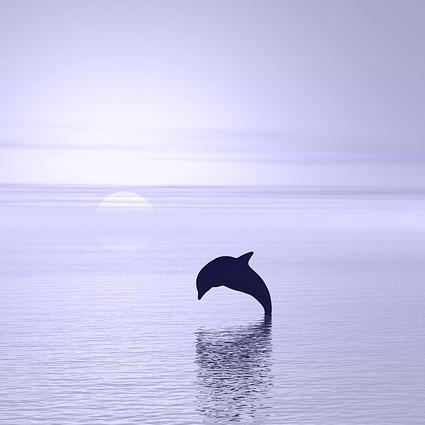 Delfin im Meer als Sinnbild für Selbstvertrauen