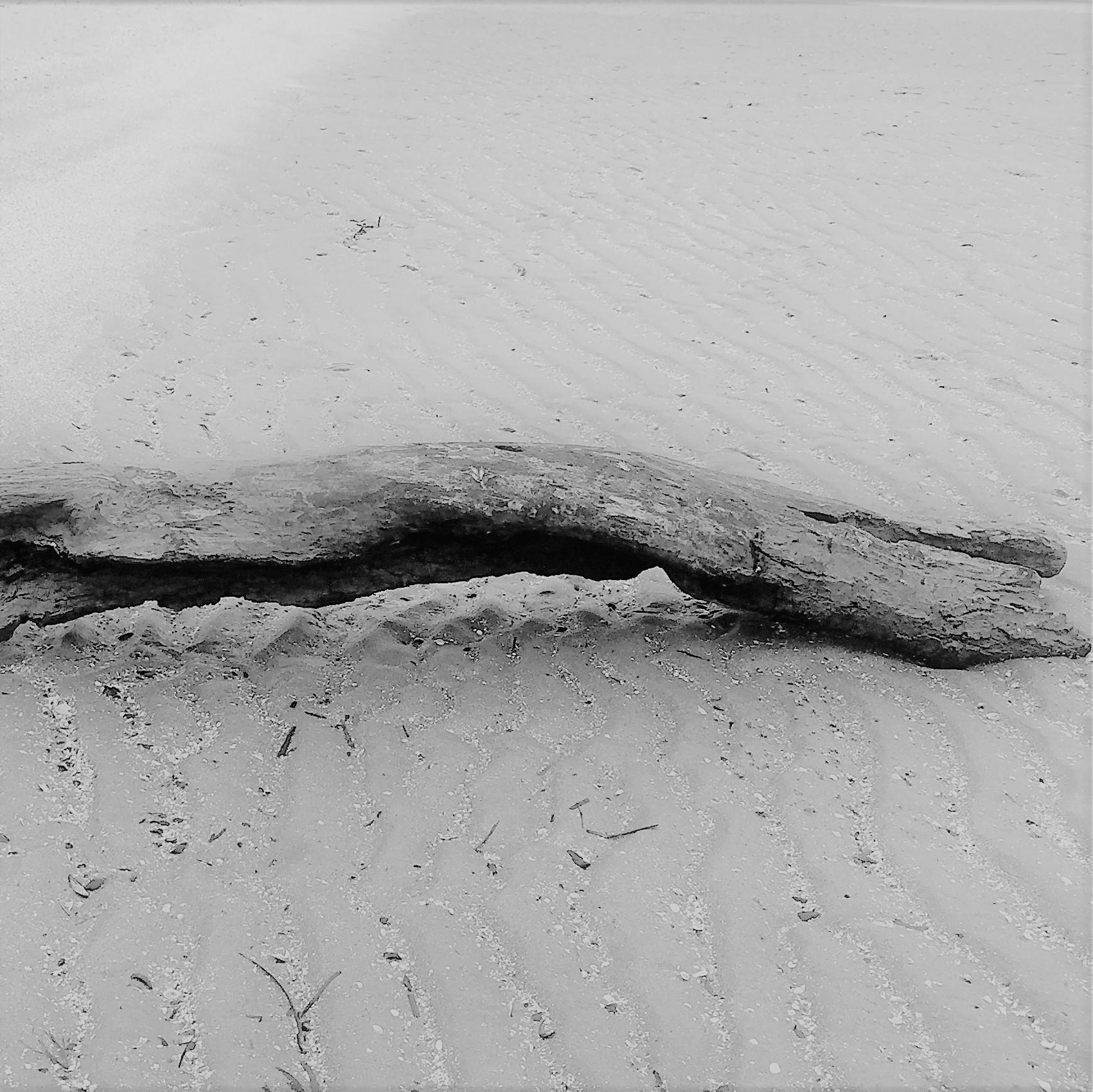 Holzstück am Strand ls Sinnbild für einen Motivationsspruch
