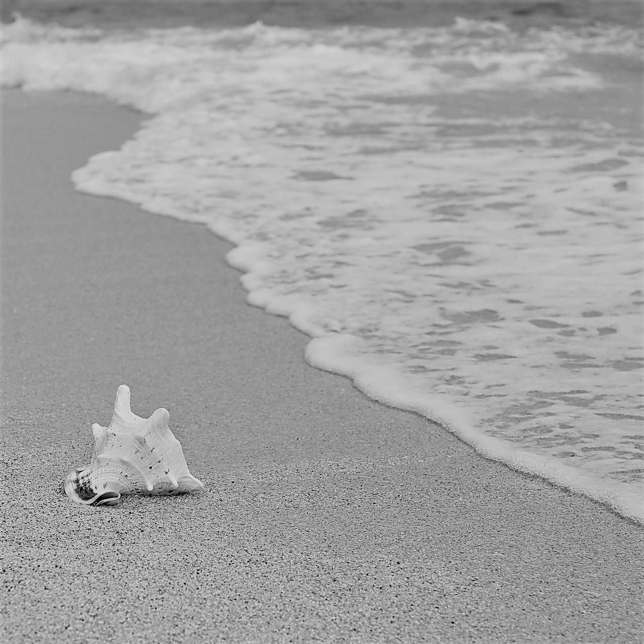 Muschel am Strand ls Sinnbild für einen Motivationsspruch